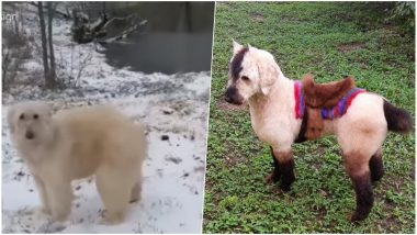 Is it a Dog, Polar Bear or a Horse? Pet Groomer Styles Her Poodle into Different Animals! (Watch Amusing Pics & Video)