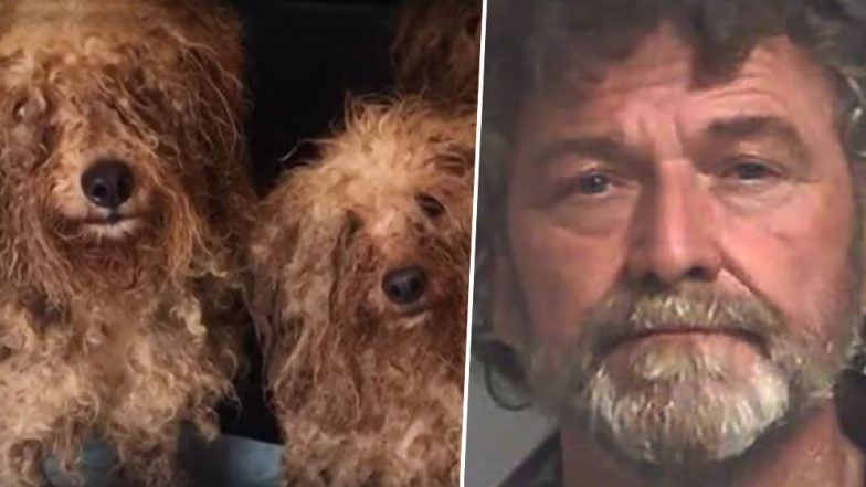 Georgia Puppy Mill Operator Arrested for Keeping 700 Dogs in 'Horrific Conditions', Arrested on Animal Cruelty Charges