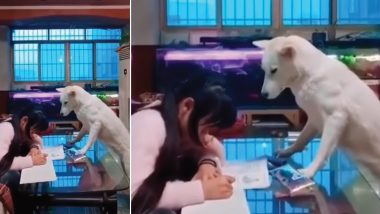Man in China Trains Pet Dog to 'Supervise' His Daughter Doing Homework, Adorable Video Goes Viral