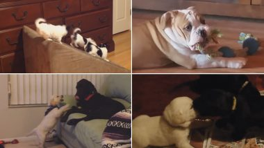 National Puppy Day 2019: Watch Funny Videos of Cute Puppies to Brighten Up Your Weekend