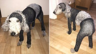 Online Shopping Goes Wrong! Pictures of Woman's Pooch Wearing Clothes She Received in Small Size Go Viral
