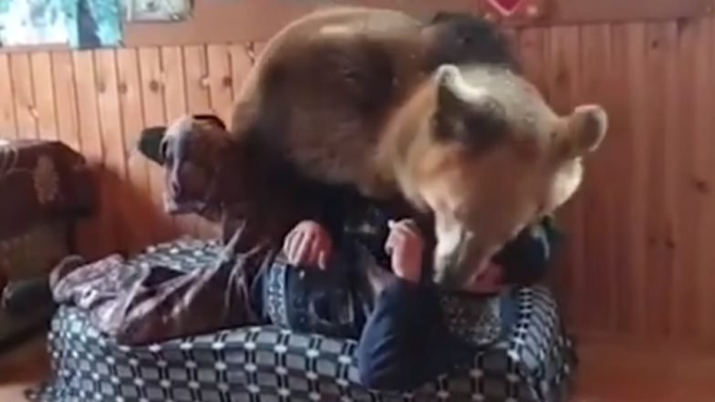 Bear & Owner Battle Over Favourite Spot on the Couch; Watch Adorable Video