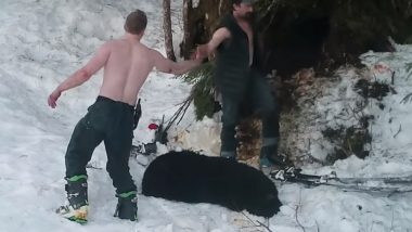 Alaska Bear and Her Cubs Killed by Father and Son in Viral Video