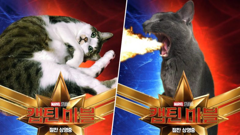 Captain Marvel's Cat 'Goose' Has Left Korea Obsessed With a Photoshop Trend That Is Going Viral on Twitter; Check Out the Pictures!