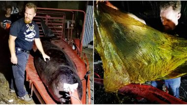 Philippines: Whale Died From 'Gastric Shock' After Eating 40 Kgs of Plastic Bags