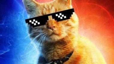 Captain Marvel: What is a Flerken? All About Goose the 'Cat', Carol Danvers' Furry Sidekick (Spoilers Ahead)