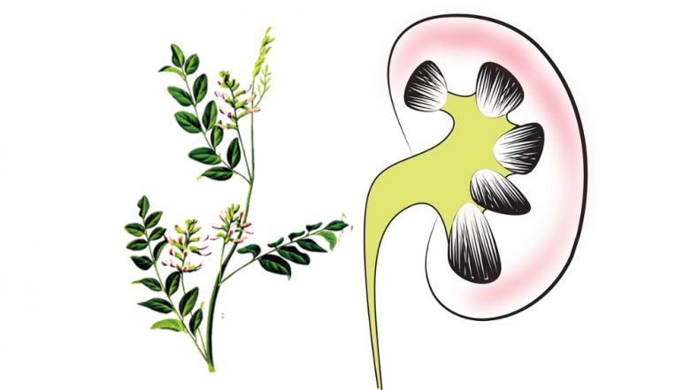 World Kidney Day: How Herbs Can Help Treat Kidney Diseases Naturally