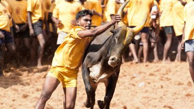 Jallikattu 2020: 30 Participants Injured During Bull-Taming Sport in Tamil Nadu's Palamedu