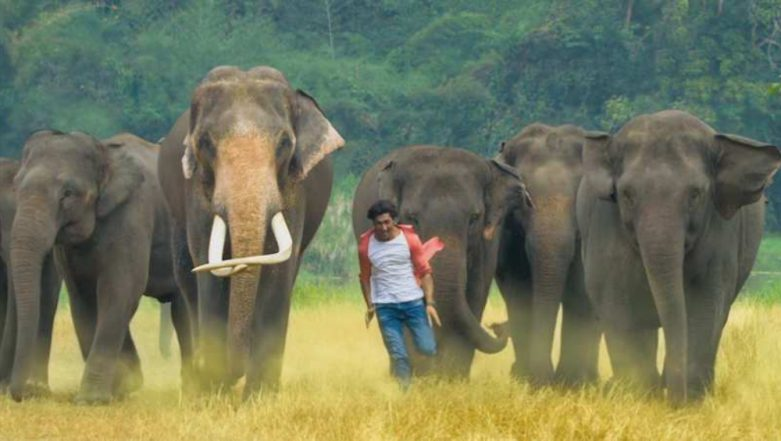 Junglee Box Office Collection Day 14: Vidyut Jammwal's Action Adventure Film Rakes in Rs 24.30 Crore