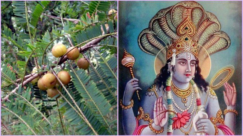 Amalaki Ekadashi 2019 Date: Why Devotees Fast & Worship Lord Vishnu & Amla Tree? Know Vrat Katha of the Auspicious Hindu Festival