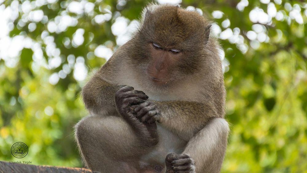 Monkey Fever in Karnataka: Two Positive Cases of Kyasanur Forest Disease Reported in Shivamogga District