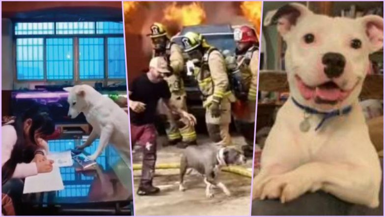 Dog Videos Ruled This Week! Watch Top Viral Clips That Touched Millions of Hearts