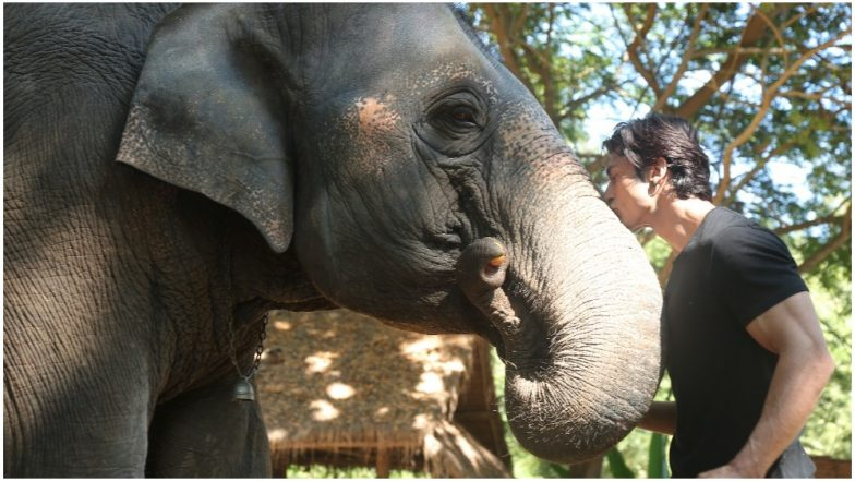 Junglee: Not Vidyut Jammwal, the Elephants Were the Real Stars of the Shoot!