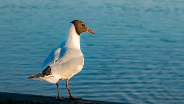 UK Man Smashes Seagull Against a Wall for Trying to Steal His Chips, Gets Fined by Court