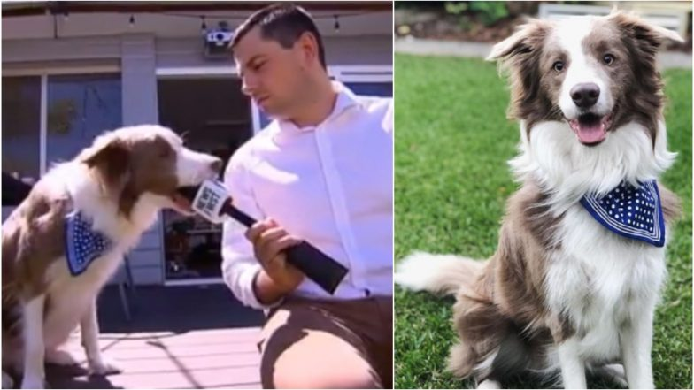 Dog Bites Reporter's Mike on Being Asked 'How Do You Cope With Fame' (Watch Funny Video)