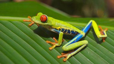 Amphibian Apocalypse: Skin Fungus Kills 100 Frog Species, Global Biodiversity Loss Continues