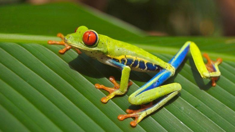 Deadliest Pathogen in History Is Taking a Toll on Frogs