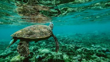As World Wildlife Day 2019 Highlights 'Life Below Water' Theme, Here Are 5 Biggest Threats to Our Oceans and Marine Life!