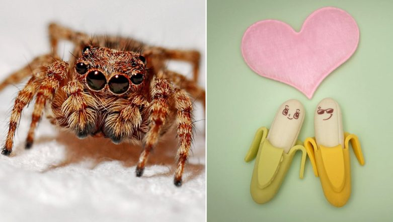 Erectile Dysfunction Cure: Deadly Spider Venom Which Causes 4 Hour Erections Can Replace Viagra, Say Scientists