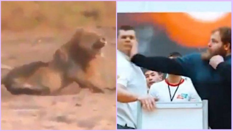Viral Videos: From Cruel Man Hunting Lion to Russia's Male Slapping Championship; Watch Top 7 Clips of the Week