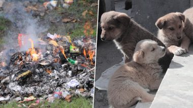 Punjab Shocker: Four Puppies Burnt Alive In Bid To Clean Plot In Jalandhar