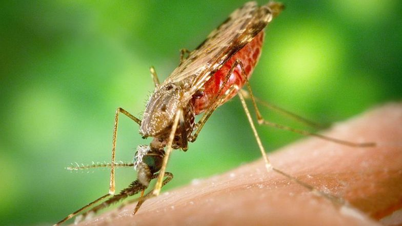 World Malaria Day 2019: Symptoms of The Mosquito-Borne Disease and Ways to Prevent Malaria