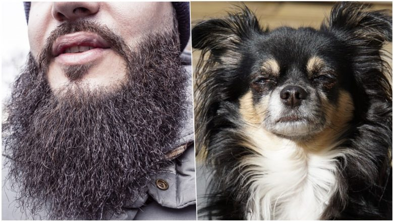 Clean Shaven or Beard Look? Study Claims Men With Beard Have MORE Germs Than Dog's Fur