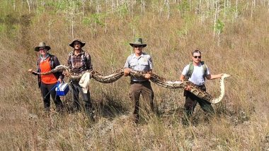 Biggest Python Ever! Snake Hunters Catch 17-Foot Pregnant Female Carrying 73 Eggs From Florida Everglades, View Pic