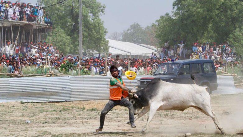 Kannauj: Bull Enters Helipad Area of Mayawati-Akhilesh Yadav Rally, Frightens Scores of SP-BSP Supporters