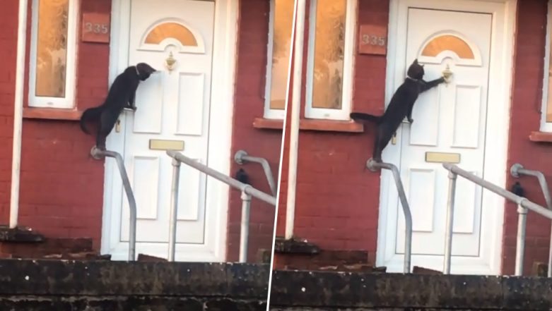 Cat Knocks on Owner's Door in Britain and Patiently Waits Outside to Let in, Funny Video Goes Viral