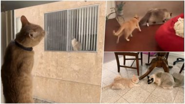 Cat 'Neighbours' See Each Other Through Window, Meet and Fall in Love; Cute Twitter Thread Celebrates their Viral Love Story