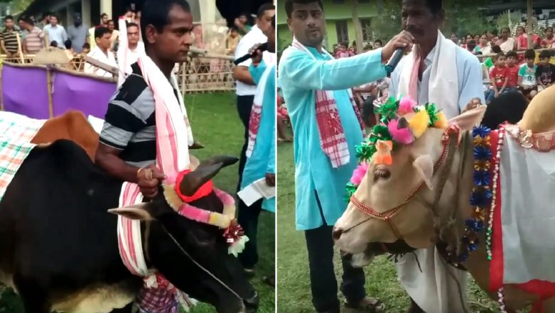 Bihu 2019 Celebrations: This Village in  Assam Organises a Cow Fashion Show! Watch Video
