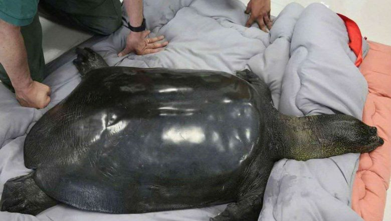 Death in China Zoo Puts World's Rarest Turtle on Cusp of Oblivion