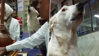 Viral Video of Adorable Dog Attending Keertan Devotedly Is Winning Hearts on the Internet! Check Twitter Reactions