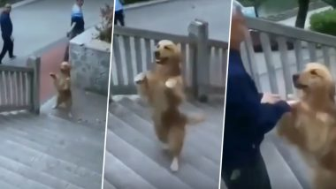 Dog in China Climbs Stairs on Two Hind Legs Just Like Humans (Watch Viral Video)