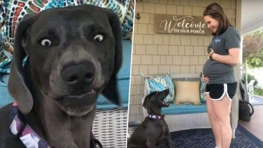 Puppy Gives a Hilariously Shocking Reaction on Learning About Owner's Pregnancy (Watch Video)