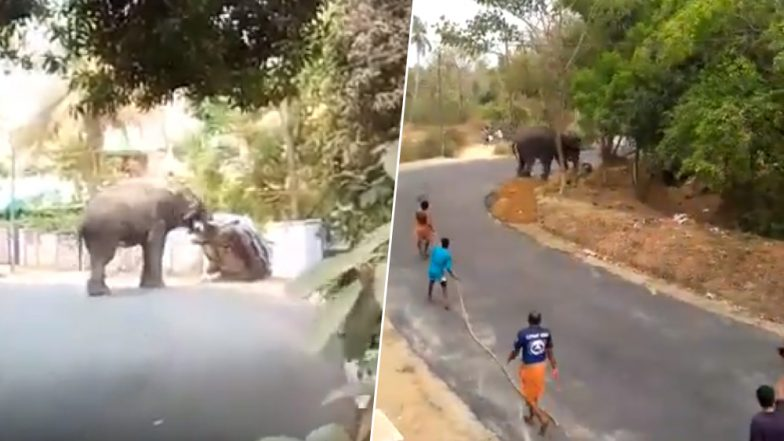 Elephant Creates Chaos During Temple Festival in Kerala's Palakkad; Topples Car, Injures Mahout (Watch Videos)