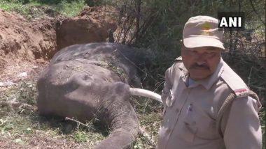 Uttarakhand: Two Elephants Killed After Being Hit by Nanda Devi Express Train in Haridwar