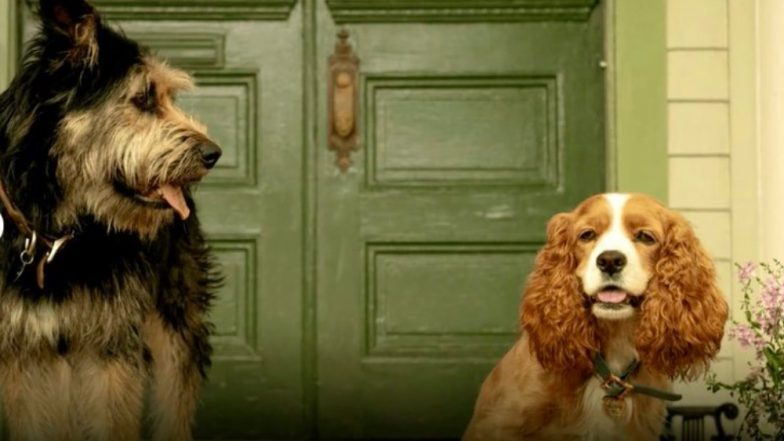 First Look Of Disney's Live-Action Lady And The Tramp Starring Tessa Thompson And Justin Theroux Is Adorable!