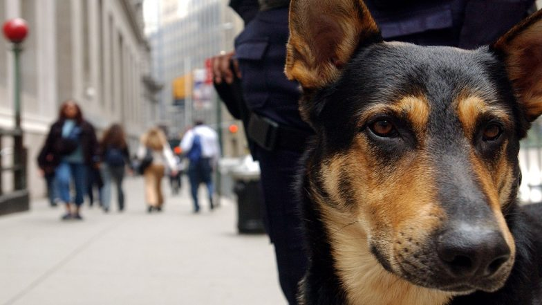 Sri Lanka Blasts: Woman Gifts 5 German Shepherd Dogs to Army for Explosive-Detection Training After Blasts