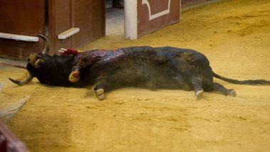 Jharkhand Lynching: Man Beaten to Death for Cutting Flesh of Dead Bull, 3 Injured
