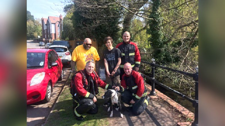 Jesus, a Dog Was Saved From Drowning at Birmingham Lake on Good Friday, Internet Lauds The Coincidence
