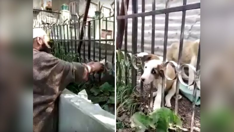 Puppy Rescued From Head Stuck in Metal Railing, Video From Kashmir Goes Viral