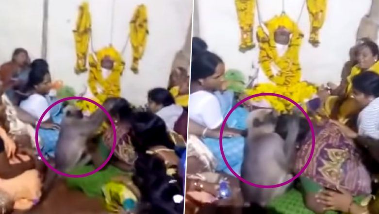 Monkey Attends Funeral and Consoles a Crying Woman in Karnataka (Watch Viral Video)