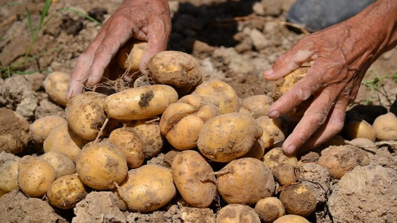 PepsiCo Is Suing Four Farmers In India For Growing Potatoes It Uses In Lays Chips
