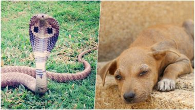 Pet Dog Saves Owner From Cobra Bite But Dies of Snake Poison in Tamil Nadu