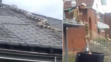 Pet Python Escapes Home and Crawls on Roof in Detroit, Scary Snake Rescue Video Goes Viral