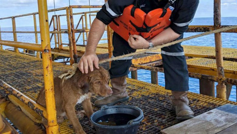 Dog Found Struggling to Swim  220 Kilometers in Gulf of Thailand, Oil Rig Crew Rescues The Distressed Animal