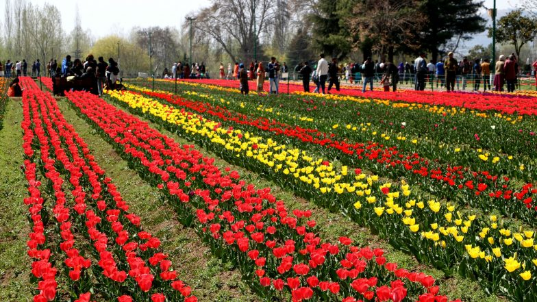 J&K's Tulip Garden, Asia's Largest Opens for Visitors; Marks the Beginning of the Tourist Season in Kashmir