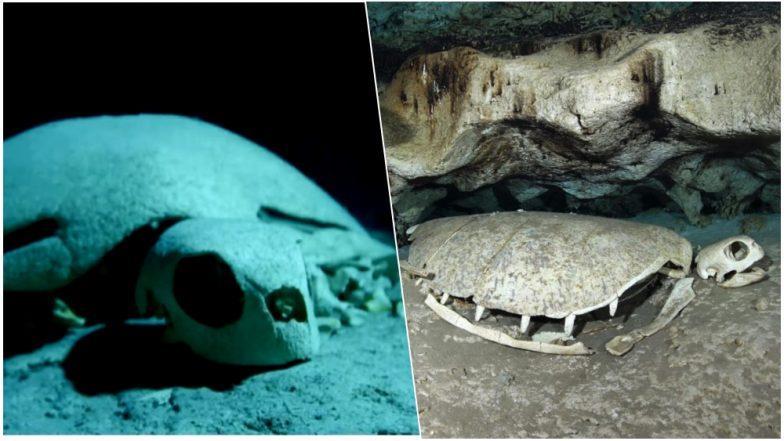 Turtle Graveyard in Indian Ocean! Spooky Skeletons of Sea Turtles Found in Underwater Caves in Malaysia (Watch Video)
